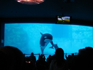 English mistakes and Nagoya Aquarium 006